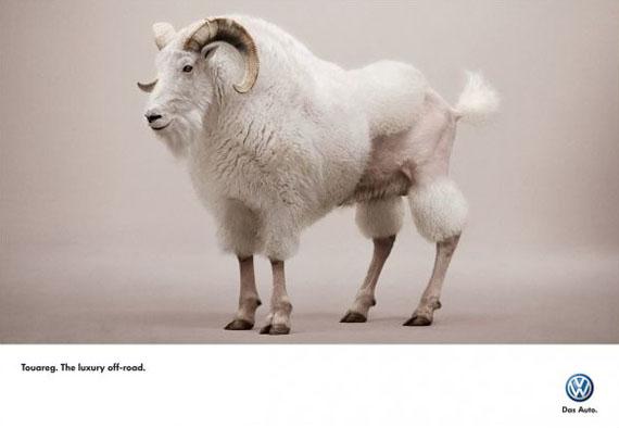 vw-touareg-goat